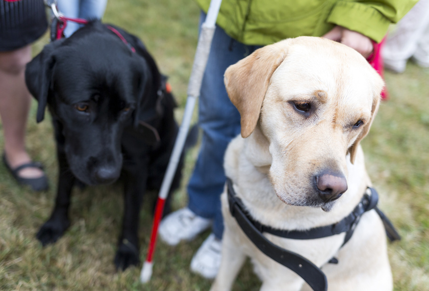 Guide dogs, Assistenzhunde