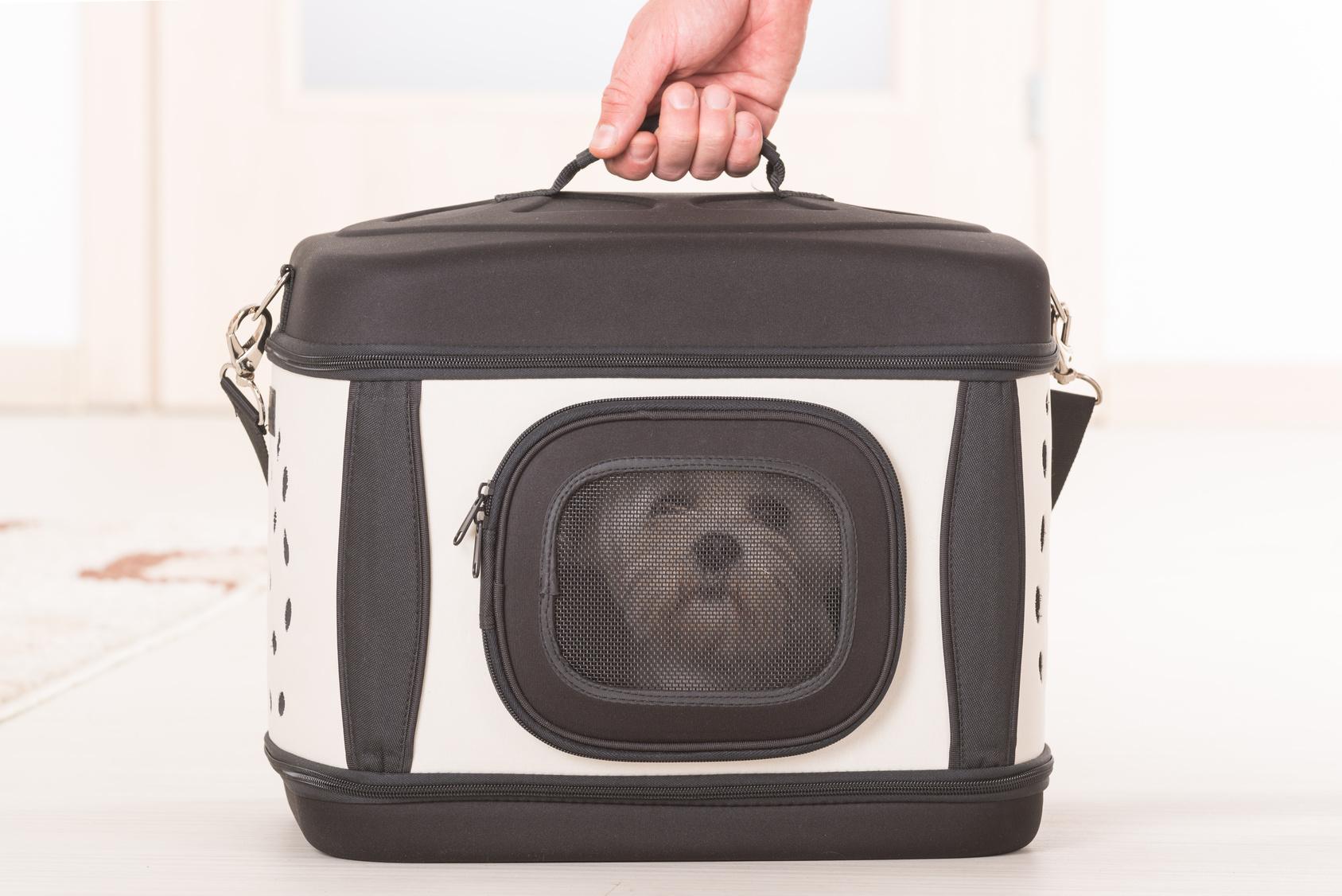 Fliegen mit Hund, Transporttasche Haustier